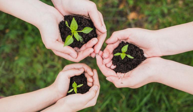 Bild von Händen und Pflanzen